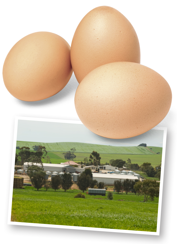 About Us - Rohde's Free Range Eggs