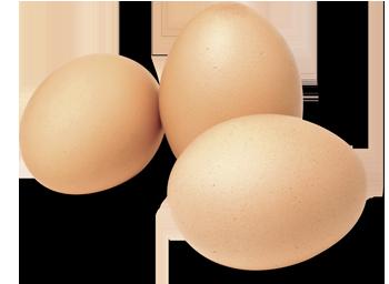 photo-eggs