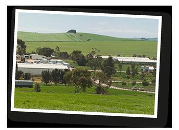photo-farm